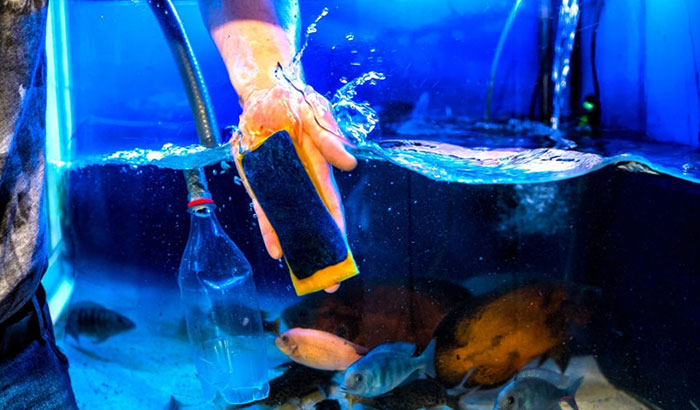 how to sanitize fish tank after disease