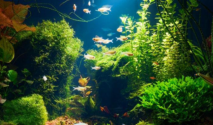 best aquarium plants to reduce nitrates