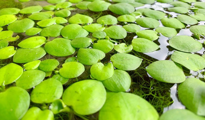 best plants for nitrate removal