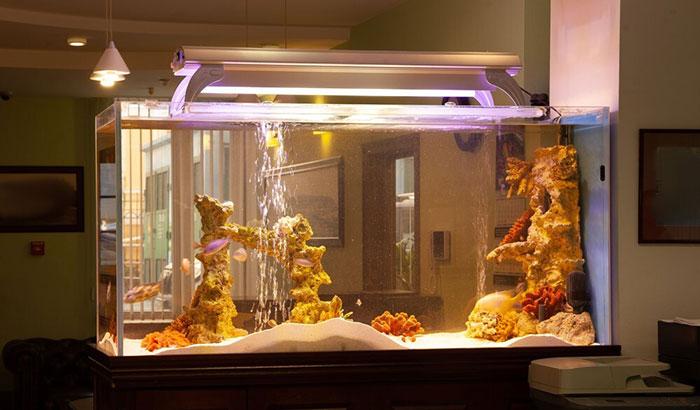 aquarium light timer dimmer