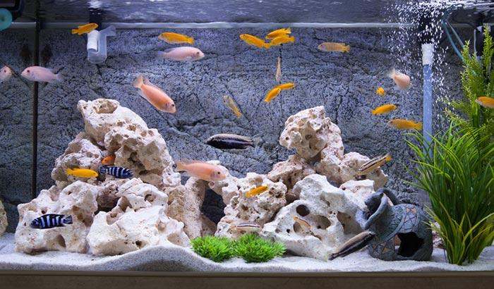 aqueon water clarifier reviews
