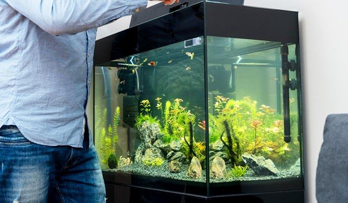 best aquarium water clarifier
