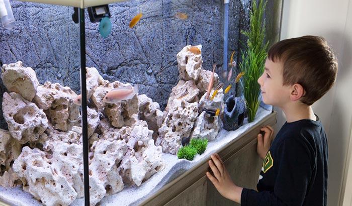 best water clarifier for aquariums