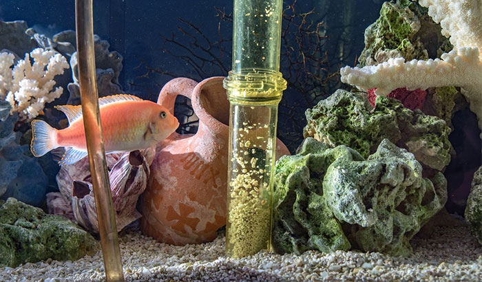 how to clean old aquarium gravel