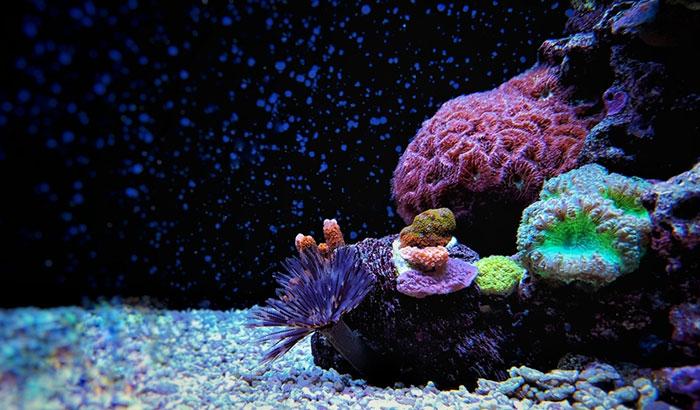 how to get rid of detritus worms in aquarium