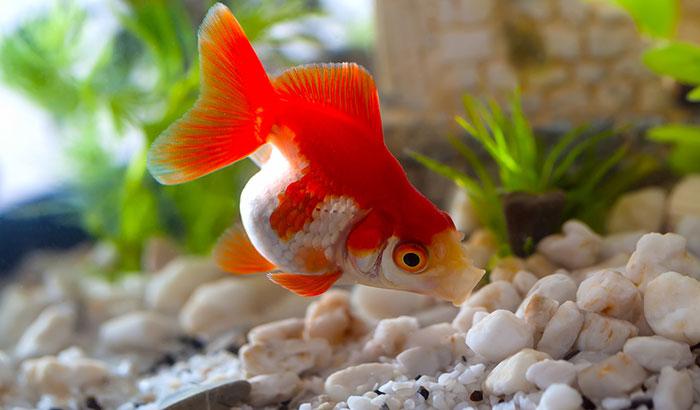 live rocks for freshwater aquariums