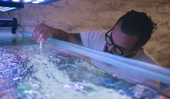 lowering nitrate levels in freshwater aquarium