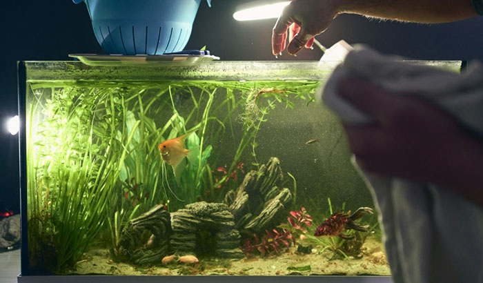 removing nitrate from freshwater aquarium