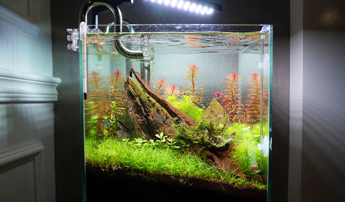 how-to-remove-nitrate-from-aquarium-water