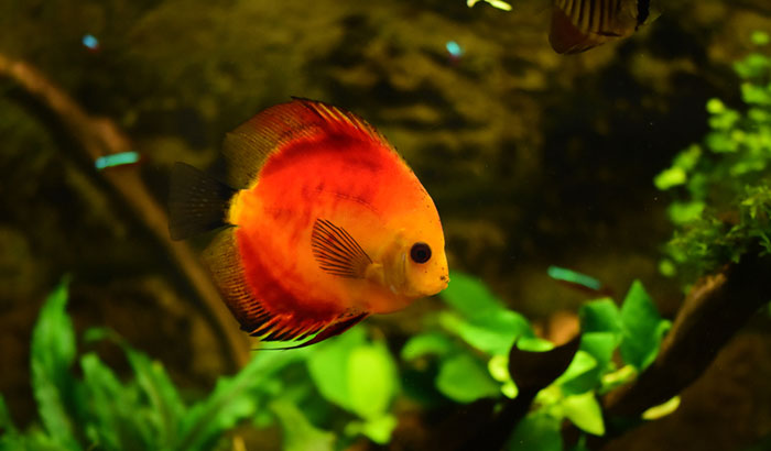how to remove tannins from aquarium water