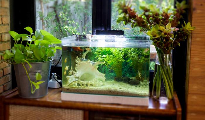 best aquarium monitoring system