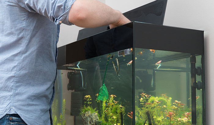 best beneficial bacteria for freshwater aquarium