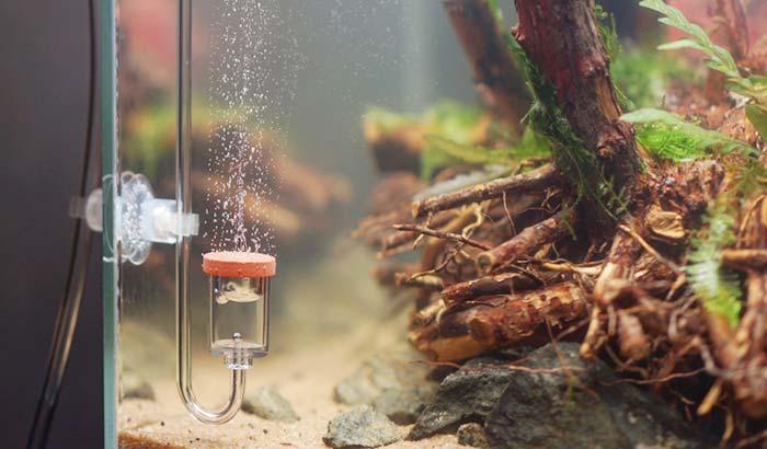 best co2 diffuser for large aquarium