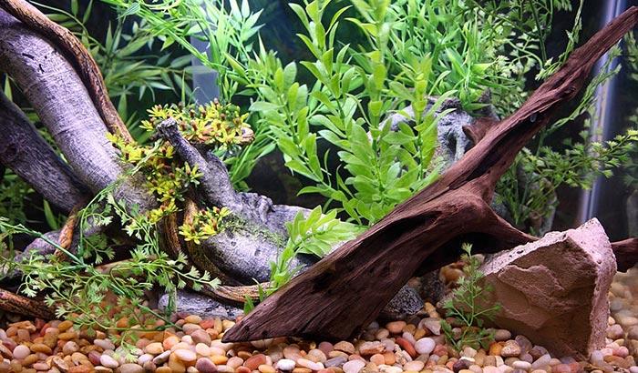 best driftwood for aquariums