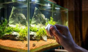 best rimless aquarium
