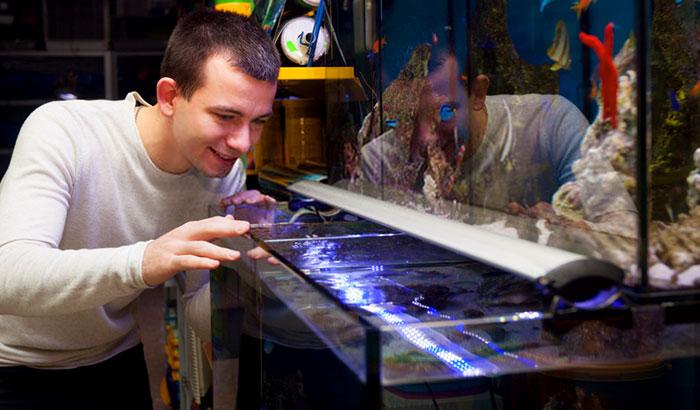 best saltwater aquarium bacteria starter