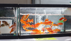 does a fish tank need an air pump
