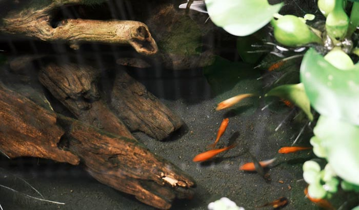 drift wood for fish tanks