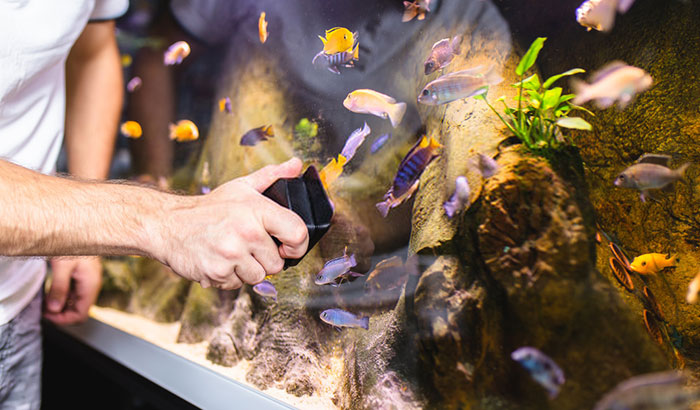how to clean a fish tank with fish in it