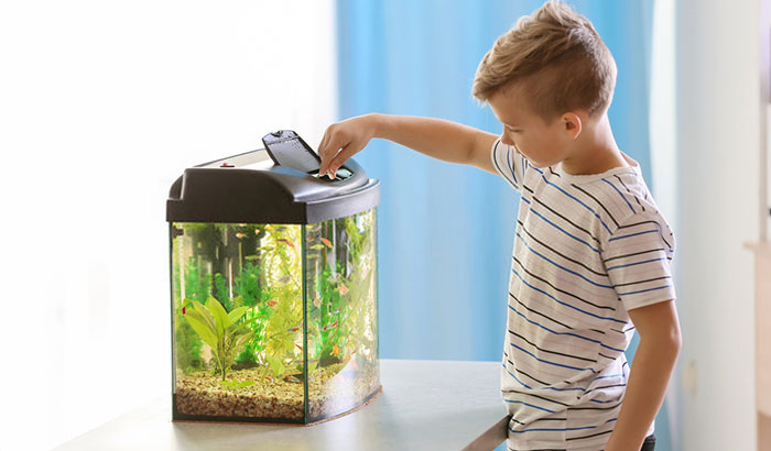 how to get ammonia levels down in fish tank