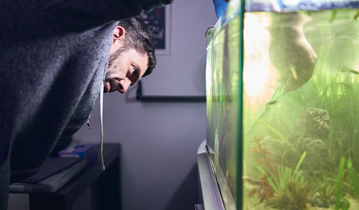 how to get rid of green water in a fish tank