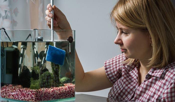 keeping aquarium glass algae-free