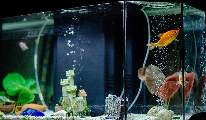 water circulation and fish health