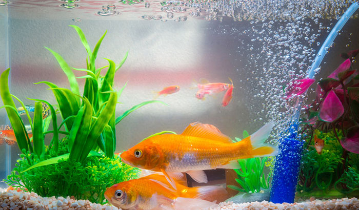 when to add water to a fish tank?