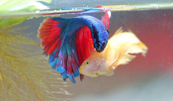 betta water conditioner safe for other fish